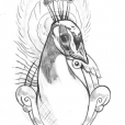 20130713_peacock