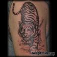 20100415_tiger