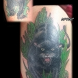 20140611_panther